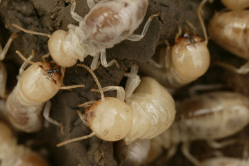Termite and Wood Destroying Insect Inspections